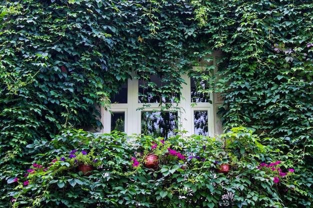 家の正面の詳細。青々とした野生のワインの葉の後ろに隠された単一の窓