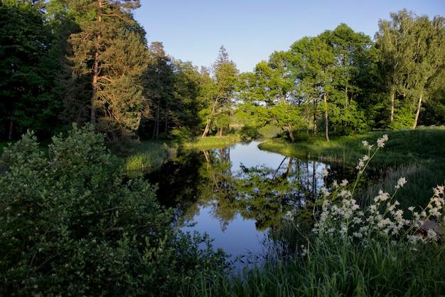 森に囲まれた澄んだ池のある穏やかな自然の風景。