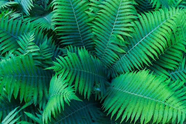 森の中の美しい緑のシダの葉。天然のシダの背景。