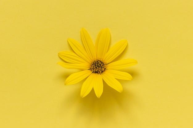 Большая желтая ромашка герберы ромашки