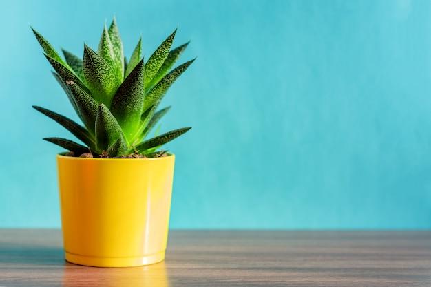青い背景に黄色の陶磁器の鍋でアロエベラの植物