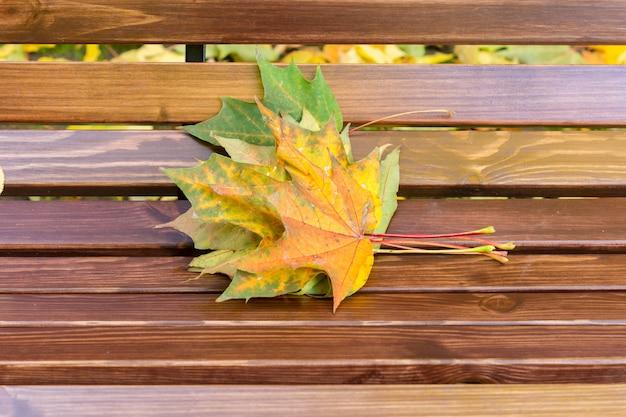 カエデの葉が公園のベンチに