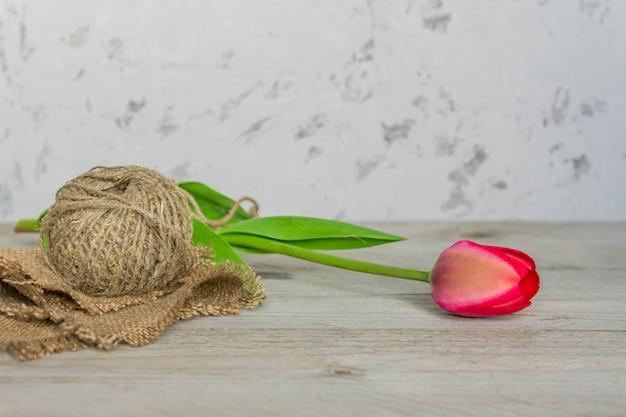 Свежий красивый розовый тюльпан с веревкой