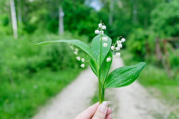 スズラン。咲く森の花の新鮮な花束。