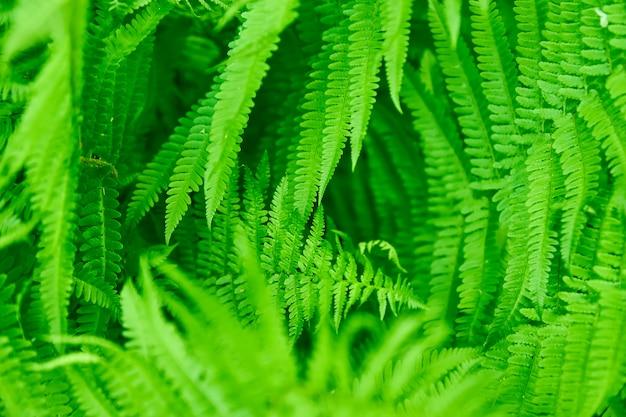 美しいシダは、緑の葉の自然な花のシダの背景を残します。