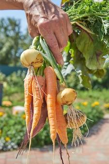 Фермер держит на заднем дворе свежесобранную домашнюю органическую свеклу, морковь и лук