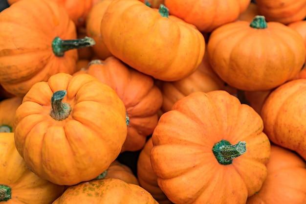 秋(秋)とハロウィーンの背景。小さな装飾的なオレンジ色のカボチャのフレーム。