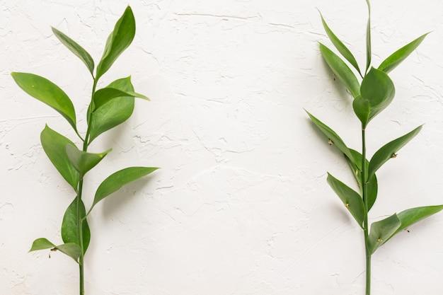 白いコンクリートテクスチャ背景に新鮮な緑のラスカスと枝を残します。コピースペースと花のフレーム
