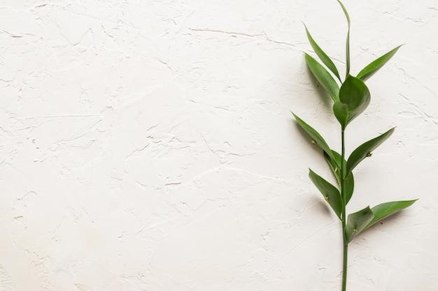 白いコンクリートテクスチャ背景に新鮮な緑のラスカスの葉と枝