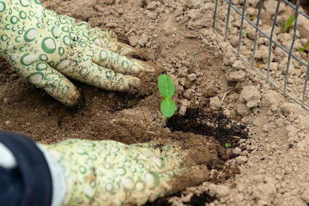 Руки в перчатках сажают росток в землю