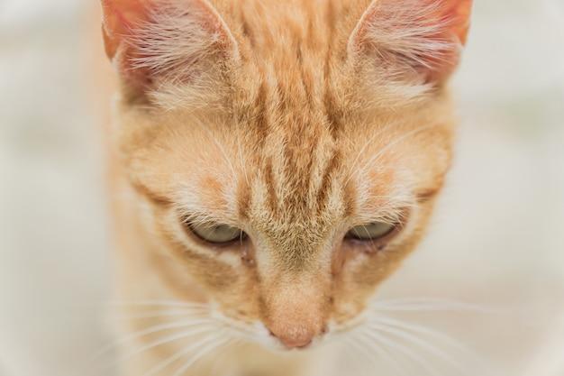 Бродячая рыжая кошка крупным планом