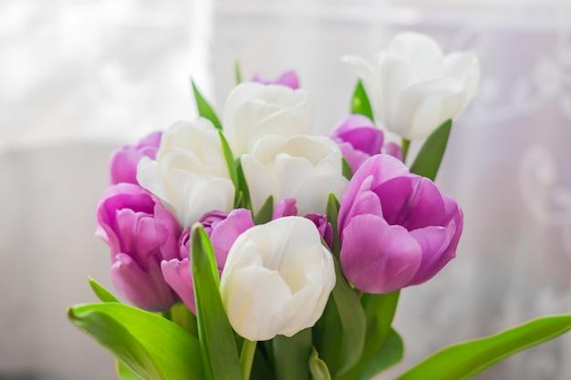 Белые и фиолетовые цветущие тюльпаны. цветочный фон