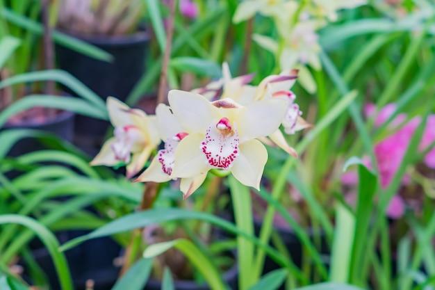 Желтые экзотические цветы орхидеи в ботаническом саду