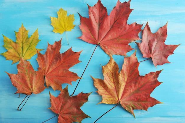 秋のカエデの葉の赤と黄色の青い木製の表面