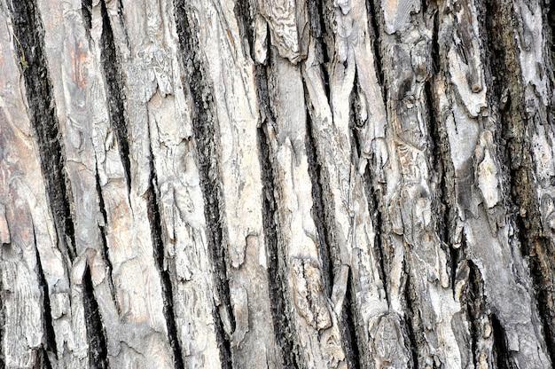Фон из коры дерева