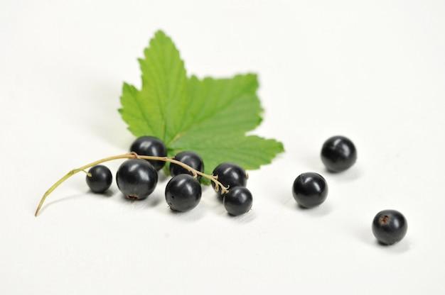 枝に黒スグリの果実