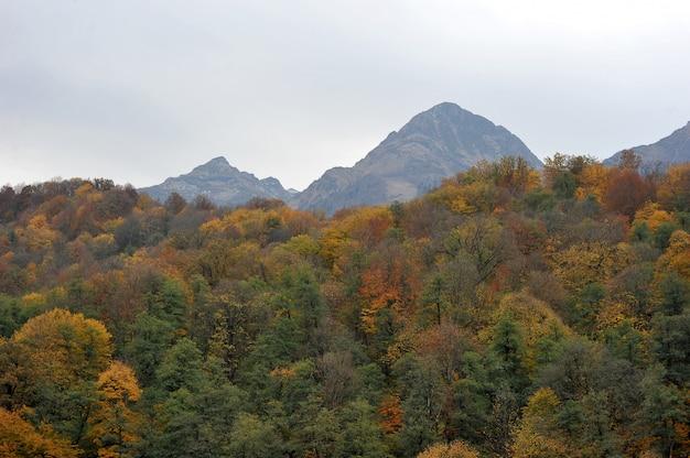 秋の森と山