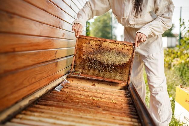 若い女性の養蜂家は、巣箱からハニカムと木製フレームを引き出します。はちみつを集めます。養蜂。