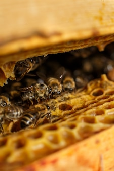 蜂の巣のハニカムのクローズアップ蜂の肖像画。養殖