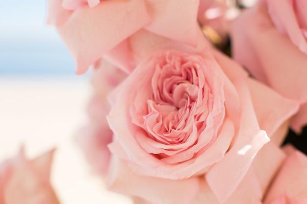 Макрос нежный свежий розовый цветок розы. свадебные украшения из живых цветов