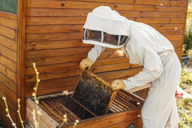 養蜂家は、ハニカムから木製フレームを巣箱から引き出します。はちみつを集めます。養蜂のコンセプト。