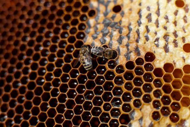 Сота естественного цвета близкая поднимающая вверх в деревянном улье с пчелами на ем. концепция пчеловодства.