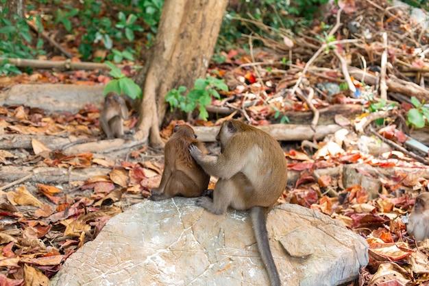 Маленькая жизнь детенышей обезьяны на тропическом острове.
