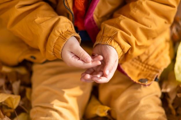 秋の公園で小さな男の子が黄色いジャケットの黄色い葉の上に座って、子供の手でてんとう虫を保持します。