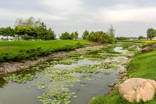 蓮が咲く狭い川の水路。緑の芝生と美しいエリア周辺