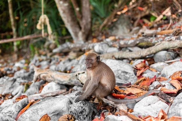 その自然環境と熱帯の島の小猿。