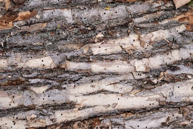 木の樹皮の詳細なテクスチャ背景。