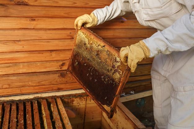 Руки пчеловода вытаскивают из улья деревянную рамку с сотами.
