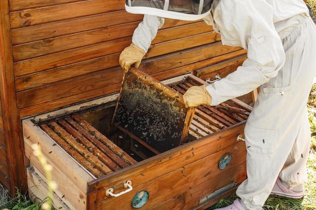 Пчеловод вытаскивает из улья деревянную раму с сотами.