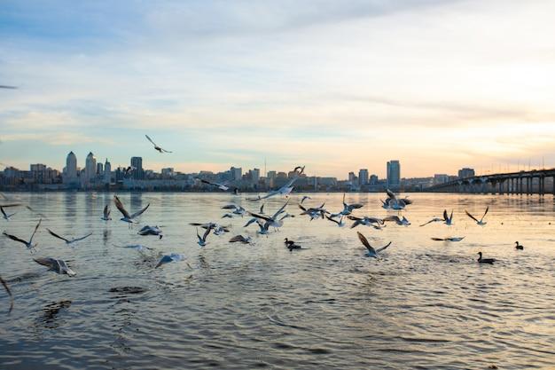 市の川のほとりにいるカモメの群れ。