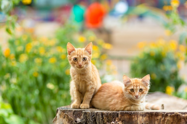 Дикие рыжие котята отдыхают в саду на деревьях.