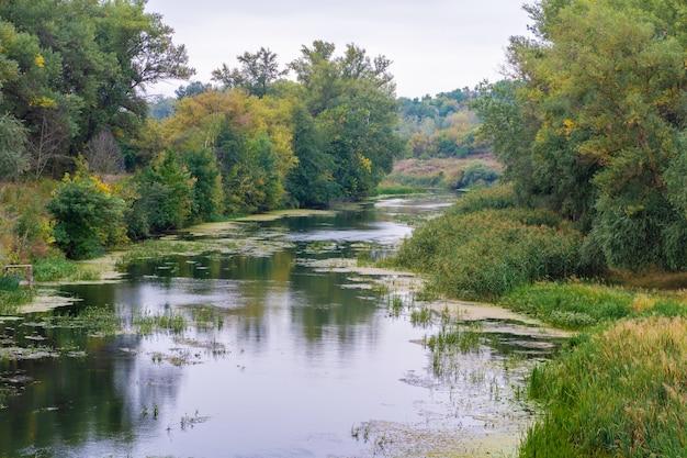 森の中を流れる川。
