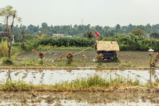 アジアの村の小さな田んぼ、畑の真ん中にはわらの屋根のある小さな家があります。