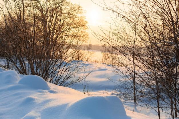 Зимний пейзаж поле покрыто снегом и лысыми деревьями.
