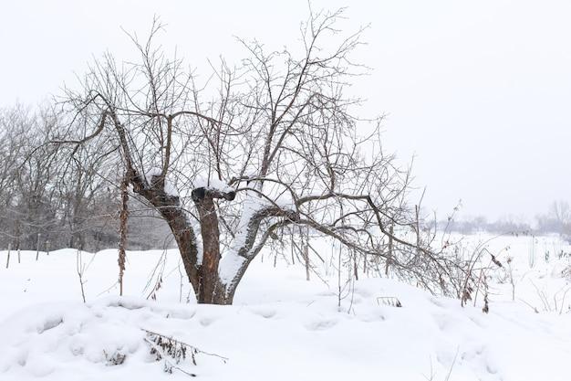 冬の風景。雪に覆われたフィールドで葉のない木