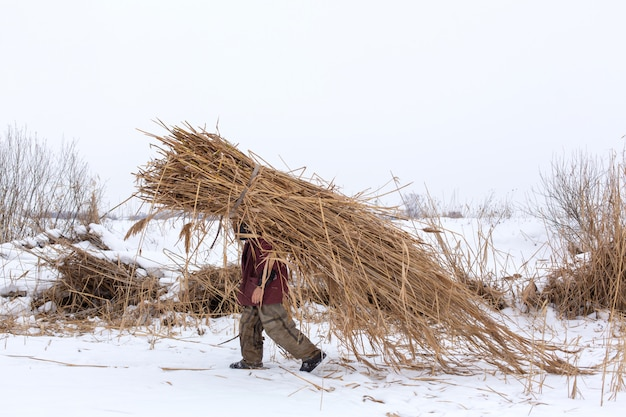 Зима. человек идет по снегу с огромной пачкой сухого тростника на спине