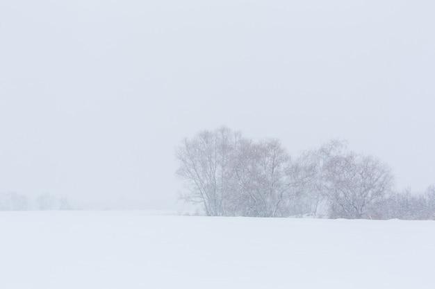 冬の風景。雪に覆われた野原の葉のない木。