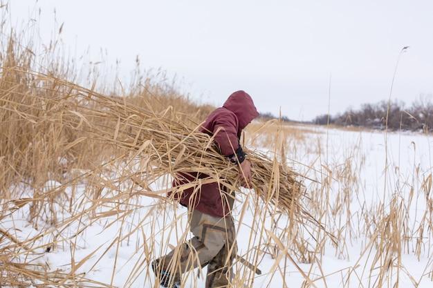 Зима. мужчина косит и собирает сухие камыши на ледяном озере.