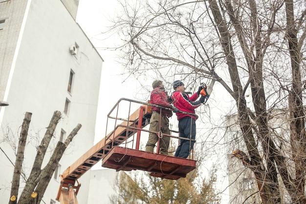 Работники коммунального хозяйства срезают ветки деревьев. обрезка веток деревьев, мешающих силовым проводам