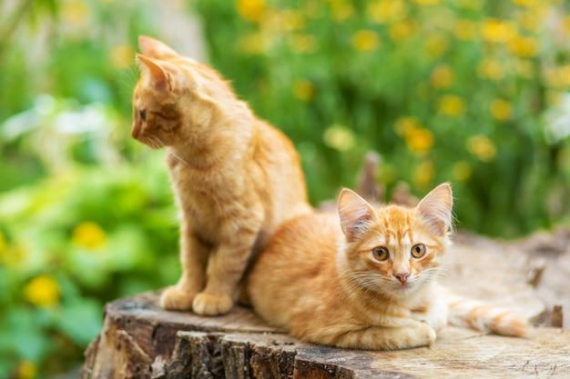 Дикие рыжие котята отдыхают в саду на деревьях