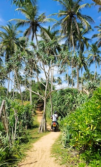 青空を背景に熱帯のヤシの木。楽園の島の自然と植物