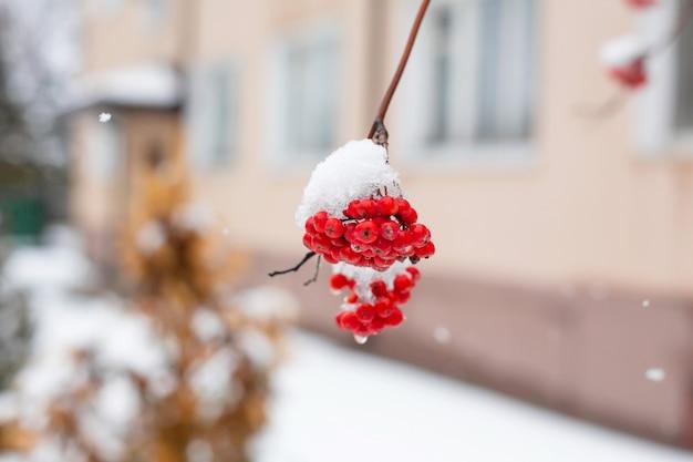 赤いナナカマドの果実と冬枝
