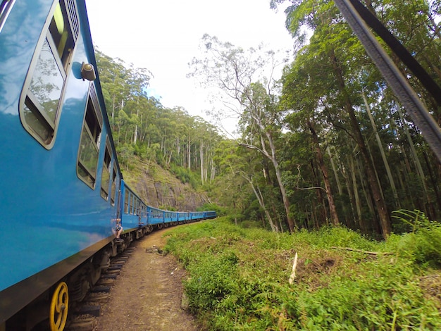 Пассажирский поезд с туристами едет по зеленым джунглям шри-ланки