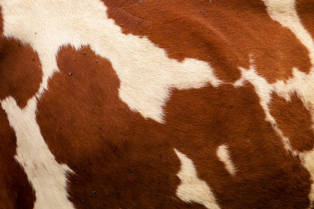 牛の皮膚の拡大図。茶色の牛のテクスチャ