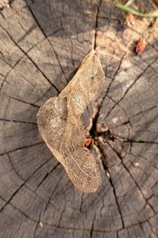 切り株に乾燥した骨格の葉