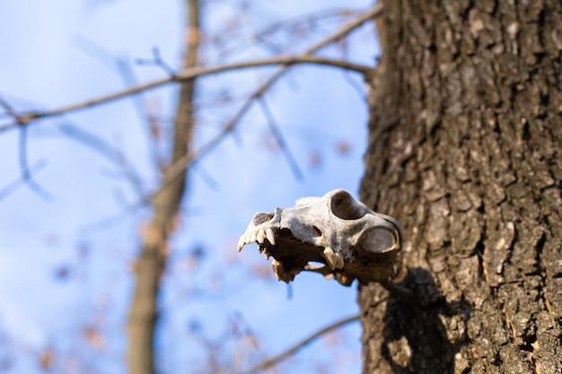Собака череп висит на дереве в парке